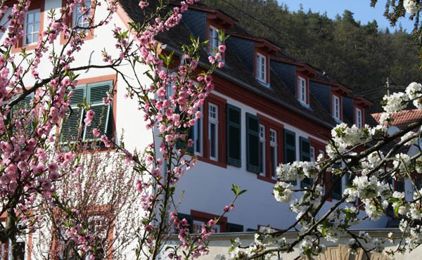 Außenansicht - Ferienwohnung Weindomizil im Hirschhorner Hof, Weindorf Königsbach, Neustadt an der Weinstraße (Pfalz)