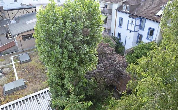 Balkon mit Blick in den ruhigen Innenhof , Ferienwohnung Hohenzollern, Neustadt / Weinstraße - ruhige Citylage